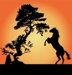 bonsai caballo