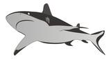 Shark - dangerous sea predator,vector illustration poster