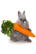 Bunny with a huge carrot