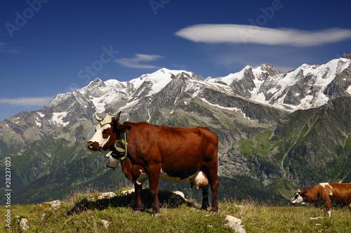 Papiers peints Alpes Vache tarine et Mont Blanc
