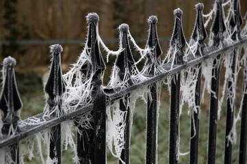 Frosted Spider Webs on Park Railings