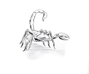 Tattoo art, sketch of a scorpion