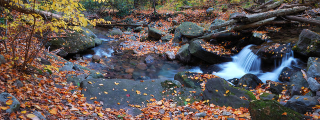 creek foliage panorama