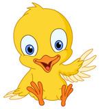 Fototapety Cute chick