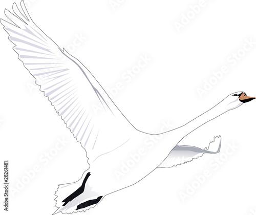 Fliegender Schwan Outline