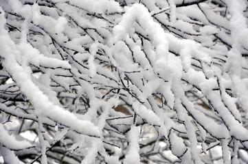 tempête de neige 08