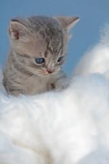 kleine Hauskatze