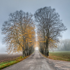 Road with avenue of trees on misty Autumn morning