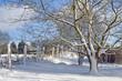 Schneebedeckter Baum am Weiderand (Norddeutschland)