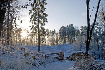 Forstwirtschaft: Winteridylle mit geschlagenen Bäumen