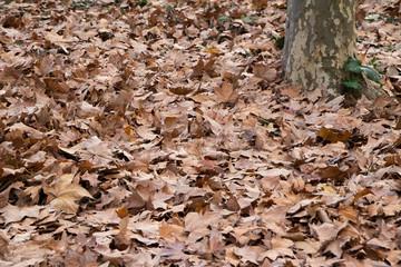 hojas otoño 3