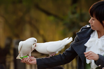 pure white dove and girl