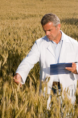 Technician in a wheat field