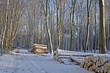 Forst- und Holzwirtschaft im Winter (geschlagene Bäume)