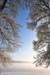 rideau de branches donnant  sur la brume matinale