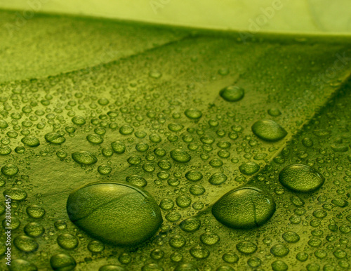 Fototapeten,close-up,makro,grün,leaf