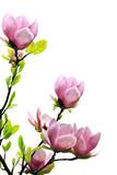 Fototapete Rosa - Baum - Baum