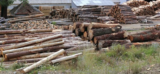 Logs timber industry trunks stacked outdoor