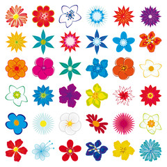A collection of flowers