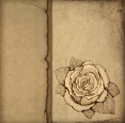 Background with pencil drawing of rose