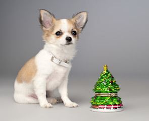 cute chihuahua puppy and  toy christmas tree