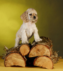 puppy standing on wood pile