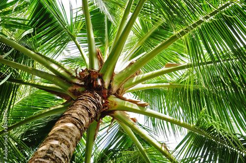 Fotobehang Palm boom Kokospalme
