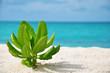 Maledivenstrand mit kleiner Pflanze