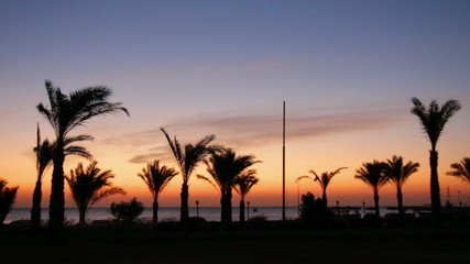 morning landscape with palm trees