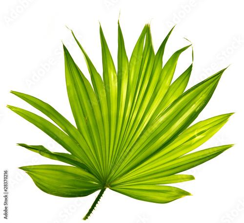 Aluminium Palm boom palm leaf