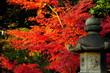 燈篭と紅葉