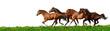 Fototapeten,pferd,galopp,reiter,herde