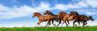 Fototapeten,herde,pferd,reiter,galopp