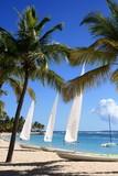 Fototapety Palmiers, petit nuage et voiliers, plage Antilles