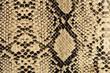 snake texture - 28393603