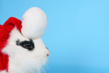 Black and white rabbit with Santa hat
