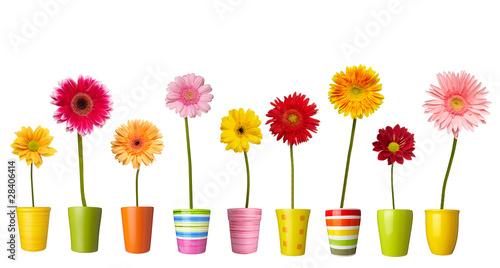 Foto op Canvas Madeliefjes flower nature garden botany daisy bloom pot