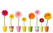 Fototapeten,blume,botanik,floral,gartenarbeit