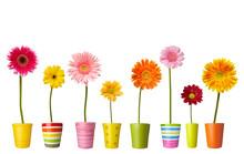 "Постер, картина, фотообои ""flower nature garden botany daisy bloom pot"""