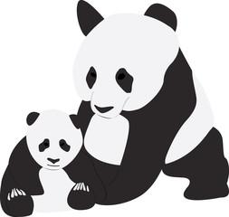 Two Giant pandas on white background