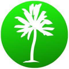 umwelt   icon . natur grün palme