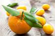 Mandarine und Kumquats