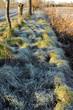 inverno paesaggio 1405