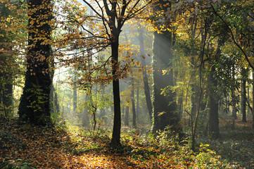 bosco alberi 1467