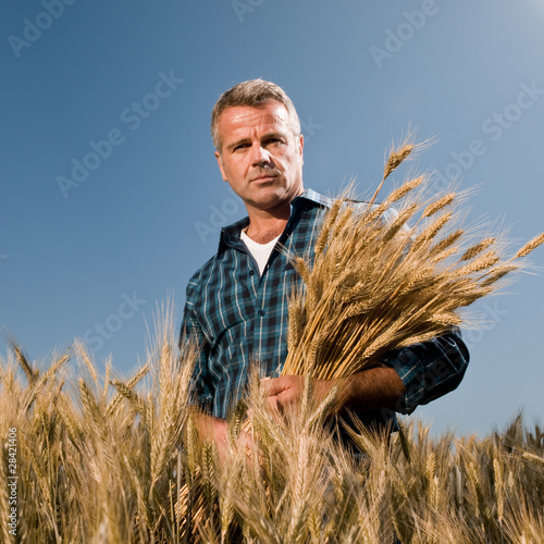 Farmer with bunch of wheat
