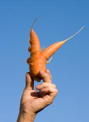 mano con carota