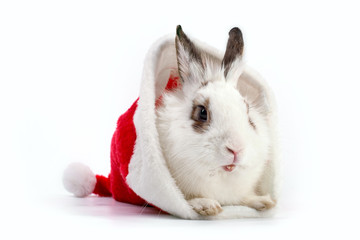 White domestic rabbit in Santa hat on white