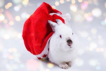 Rabbit in a Santas hat