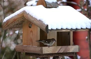 Futterhaus mit Schneedach