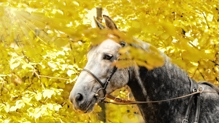 Orlov Trotter horse portrait in autumn leaves